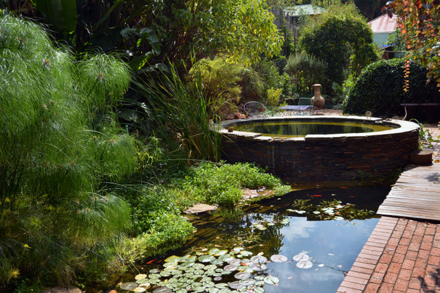 Jane 39 s delicious garden from pool to swimming pond for Pond to swimming pool conversions