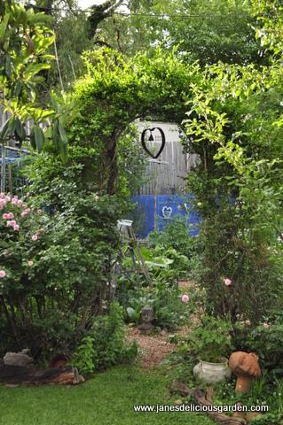 Jane\'s Delicious Garden - My garden